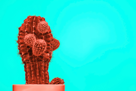 Cactus Fashion Set Design. Minimal Stillife. Trendy Bright Colors. red plant on blue background