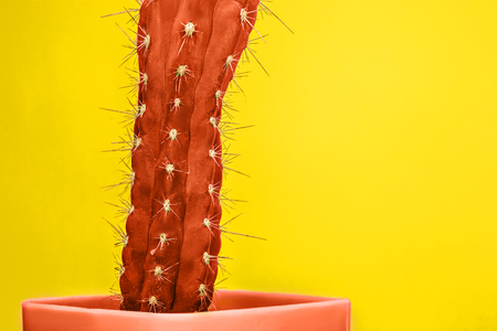 Cactus Fashion Set Design. Minimal Stillife. Trendy Bright Colors. The red plant on yellow background
