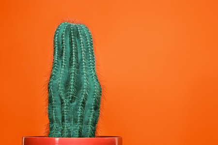 Cactus Fashion Set Design. Minimal Stillife. Trendy Bright Colors. Green plant on red background