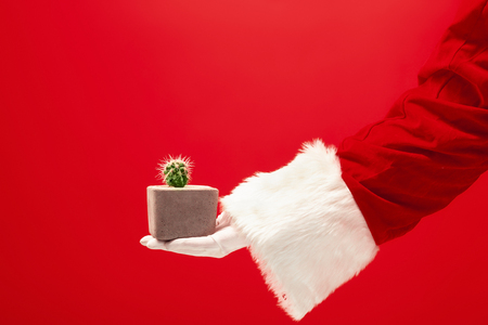 The hand of santa claus holding an cactus plant on red Stock Photo