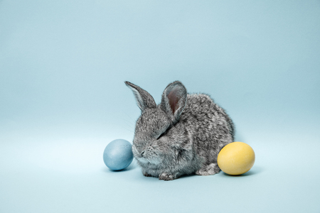Easter bunny rabbit with painted eggs on blue background. Easter, animal, spring, celebration and holiday concept. Stock Photo