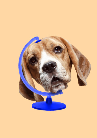 An animals rights protection. Pets must be happy all around the world - give them home and love. A globe with a blue stand as a dogs head on yellow background. Modern design. Contemporary art collage.
