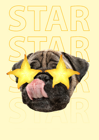 Superstar. Dogs or pugs head with yellow juicy carambola as an eyes against banana-colored background. Modern design. Contemporary art collage. Concept of music, holiday, animal rights or weekend. Stock Photo