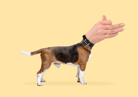 The king speech. A dog headed by male hand showing pets sign against yellow background. Negative space to insert your text. Modern design. Contemporary art collage. Concept of animals right.