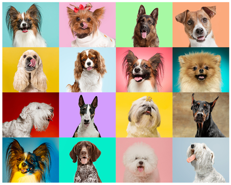 Little dogs are posing and looking in the camera. Cute doggies or pets are happy. The different purebred puppies. Creative collage isolated on multicolored studio background. Front view.