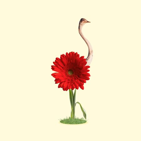 Self growned. An ostrich as bright red flower, growning on the ground on yellow background. Negative space to insert your text. Modern design. Contemporary art. Creative conceptual and colorful collage.