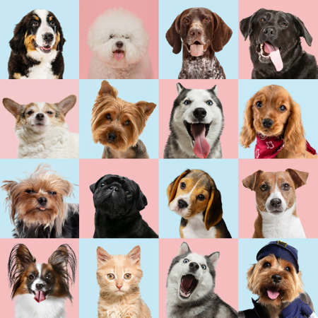 Stylish adorable dogs and cats posing. Cute pets happy. The different purebred puppies and cats. Art collage isolated on multicolored studio background. Front view, modern design. Various breeds.