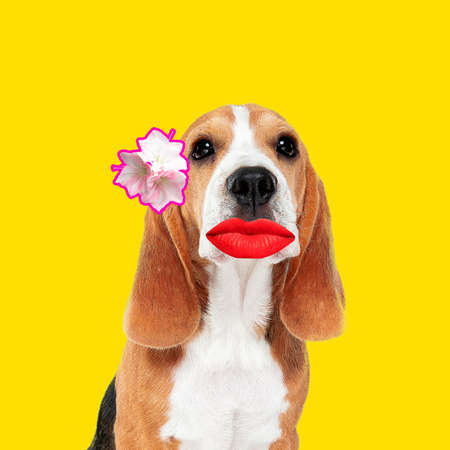 Make up. Modern design. Contemporary art collage with cute dog and trendy colored background with geometric styled elements. Inspirative art, pets, animal, style and fashion concept. Copyspace. Stock Photo