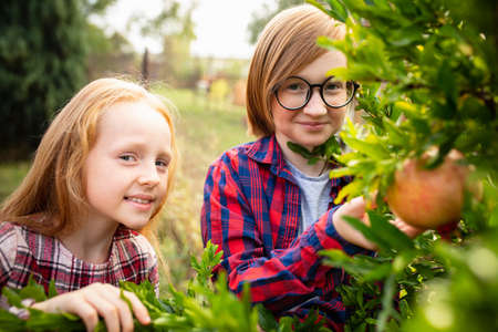 Vitamins. Happy brother and sister gathering apples in a garden outdoors together. Love, family, lifestyle, harvest, autumn concept. Cheerful, healthy and lovely. Organic food, agriculture, gardening. Imagens