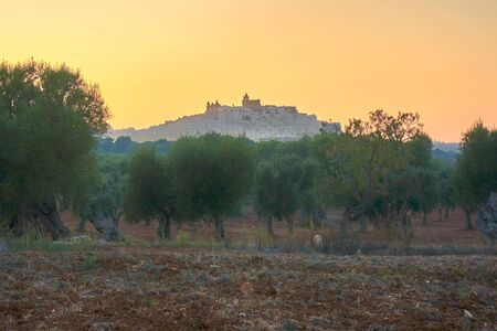 Cityscape of Ostuni Puglia Italy At Sunset With Olive Trees In The Foreground During A Orange Glowing Sunset
