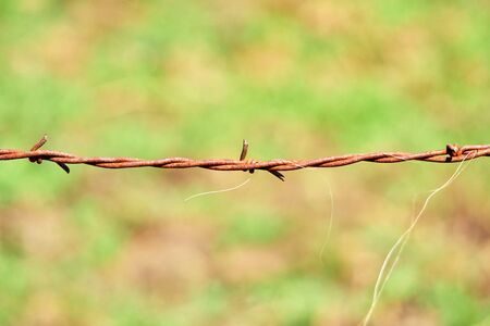 Barbed wire on green meadow background with horsehair Archivio Fotografico
