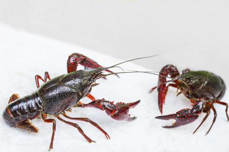 chitin: Crayfish Stock Photo
