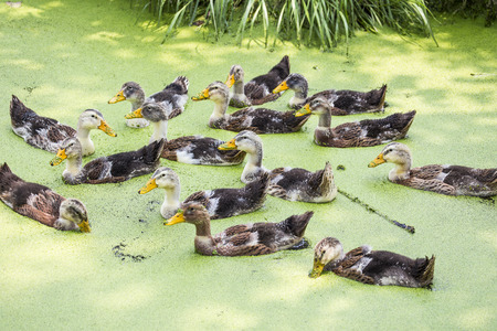 bevy: A bunch of duck