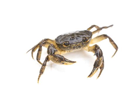 arthropod: Crab
