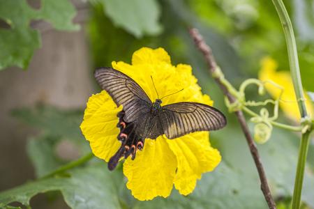 moth: The moth