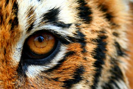 Eye of the tiger Banque d'images