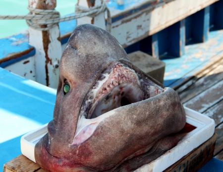 maw: shark head on fish market in Greece island Zakynthos