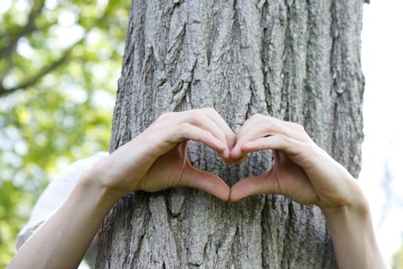 Fingers formed in the shape of a heart on a tree trunk photo