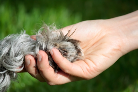 pet care: Friendship between human and dog - shaking hand and paw