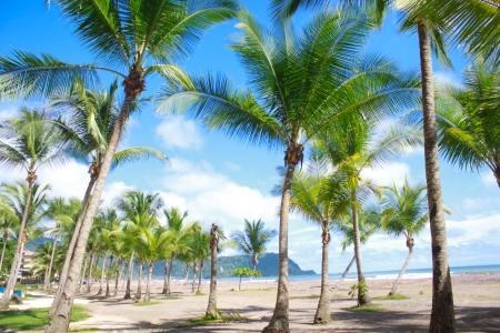 Beautiful tropical beach with palm trees in Jaco, Costa Rica