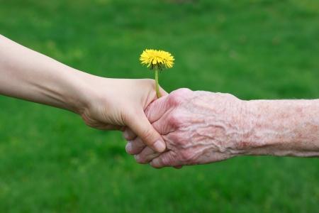 genegenheid: Jong en senioren hand houden van een paardebloem Stockfoto