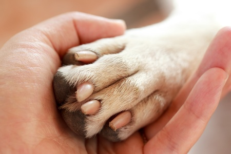 holding close: Friendship between human and dog - shaking hand and paw