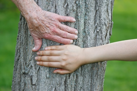 Old and Young Hands on Tree Trunk