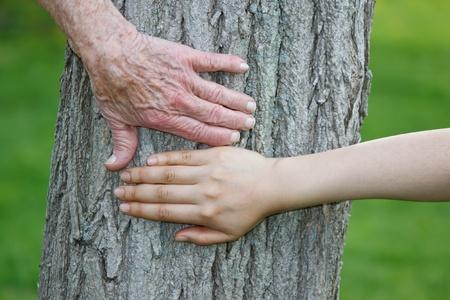 Oude en Jonge Handen op boomstam Stockfoto - 10580100