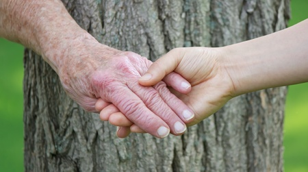 elder tree: Senior and young woman holdign hands over tree trunk