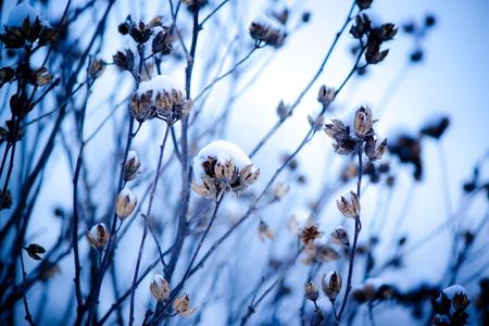 Flower in Snow photo