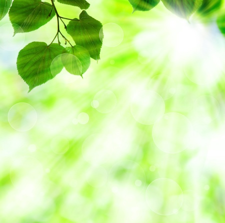 defocus: Spring sun beam with green leaves over shiny lights background