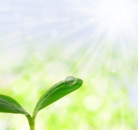 Young plant with a droplet over shiny spring background Stock Photo - 12044959