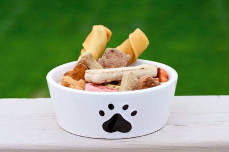 Dog food a in dog bowl  photo