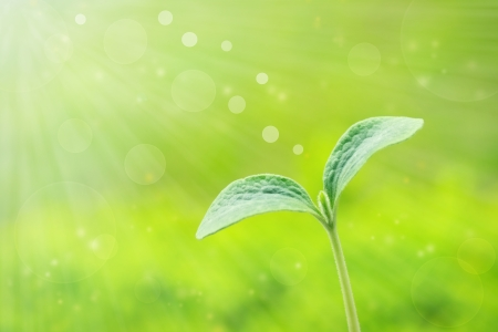 Young plant over shiny spring green background Stock Photo - 13667124