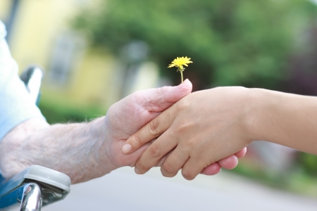 Young and senior hands holding a yellow dandelion photo