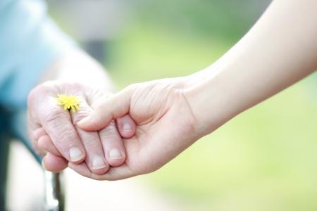 Jong en senior handen die hun handen met een gele paardebloem Stockfoto