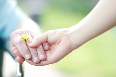 Young and senior hands holding their hands with a yellow dandelion Imagens