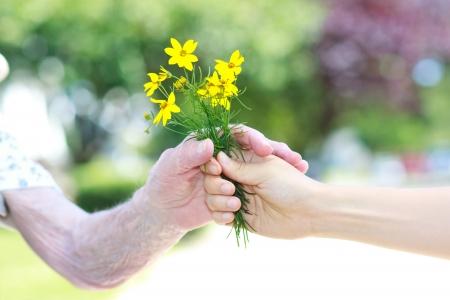 Giving gelben Blüten zum Senior Dame außerhalb Standard-Bild - 14259772