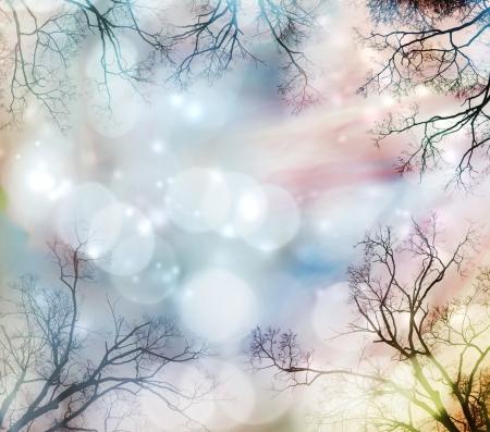 Abstract lights background with tree border Фото со стока - 16463873