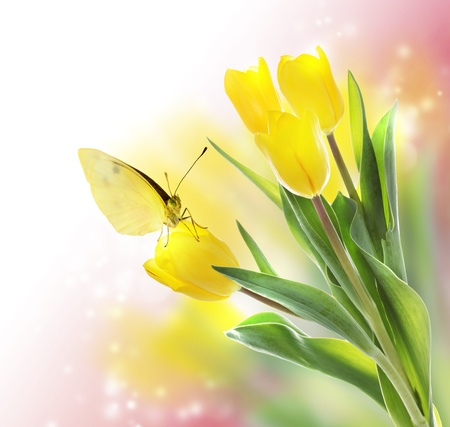 Yellow Tulips with a Butterfly on Pink Soft Light Background Stock Photo - 18222177