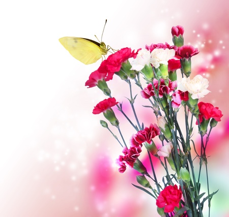 Pink carnation flowers with a butterfly on soft light background photo