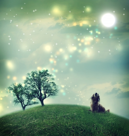Little dachshund dog in a magical landscape in the night photo