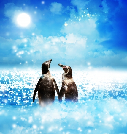 Penguin couple with a shooting star in the night fantasy landscape  photo