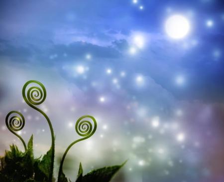 botanic: Three plant tendrils on night fantasy  Stock Photo