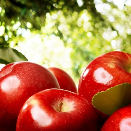 apfelbaum: Rote Äpfel draußen mit einem Laub Hintergrund Lizenzfreie Bilder