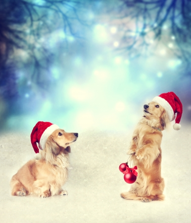 holding a christmas ornament: Two Dachshund dogs with Santa hats together on the snow in the night