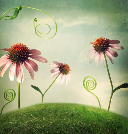 Echinacea flowers in a fantasy hilltop landscape Stock Photo