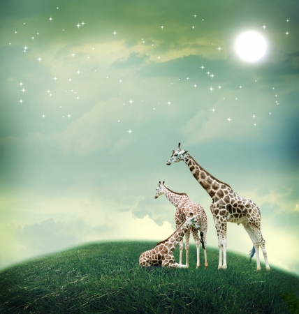 Three giraffes relaxing on the fantasy landscape