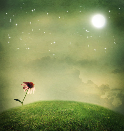 One echinacea flower on a fantasy hilltop under the moon photo