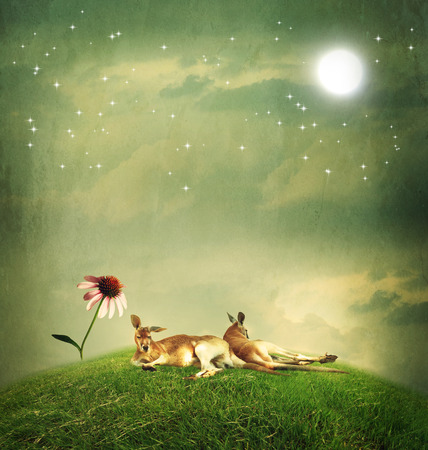 hilltop: Kangaroo couple relaxing on a hilltop under the moon